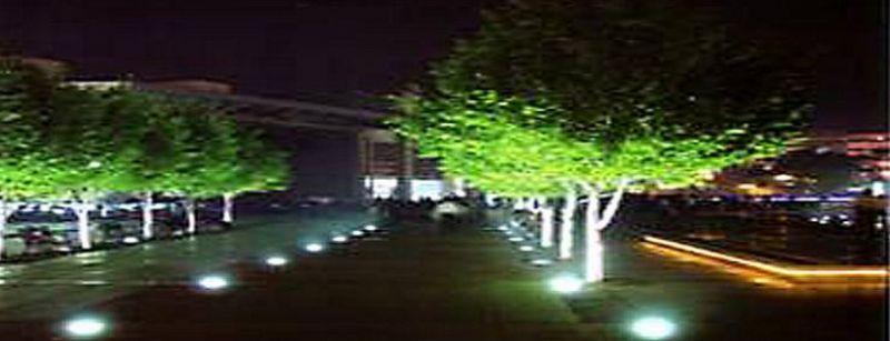 """为植物选择景观照明要""""讲究""""通化"""